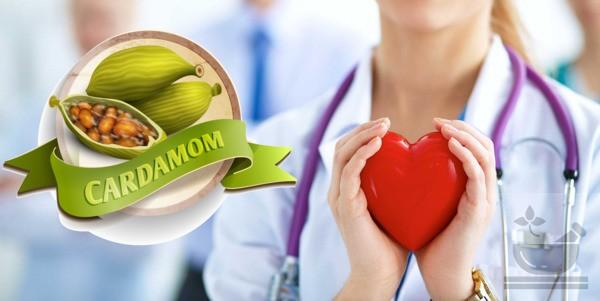 Кардамон полезен сердцу