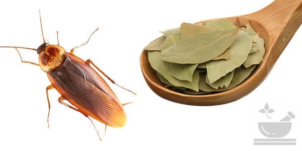 Лавр от насекомых