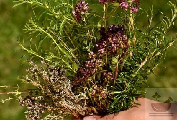 Травы из Прованса