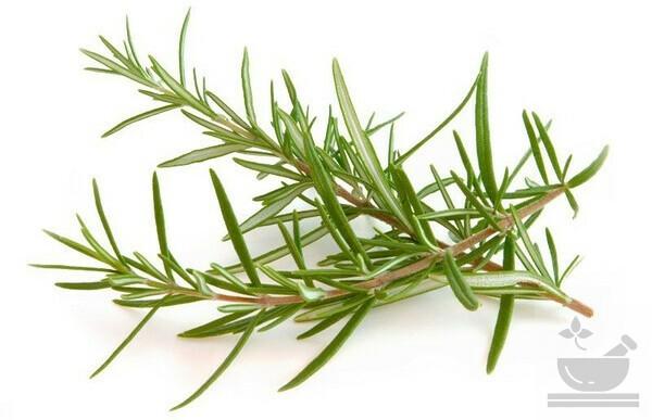 Розмарин в прованских травах