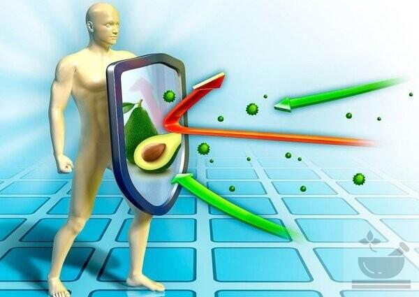 Авокадо содержит противовоспалительные свойства