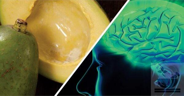 Авокадо для здоровья мозга