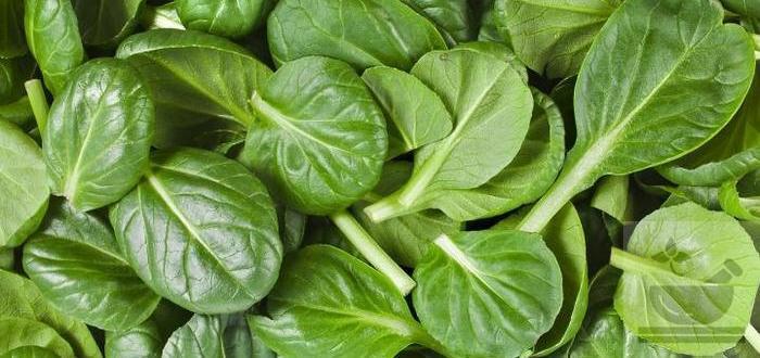 шпинат полезные свойства