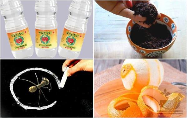 Что применять от муравьев