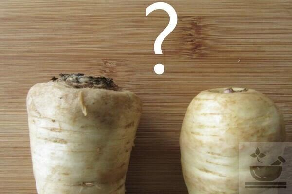 Пастернак или корневая петрушка