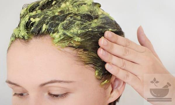 Как делать маску для волос из авокадо